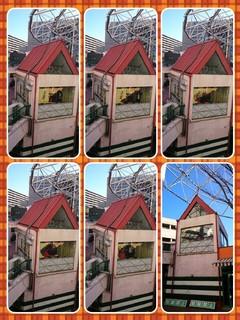 collage-1488192673562.jpg